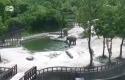 Gajah-Kecil-Diselematkan-Induk-dan-Bibinya.jpg