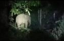 Gajah-masuk-kampung2.jpg