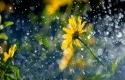 Hujan18.jpg