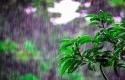 Hujan9.jpg