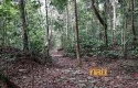 Hutan-adat.jpg