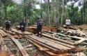 Illegal-Logging-Pelalawan.jpg