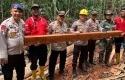 Illegal-Logging-di-Pulau-Rupat.jpg