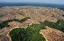 Ilustrasi-Deforestasi.jpg