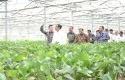 Jokowi-di-Lokasi-pembibitan-pabrik-APR.jpg