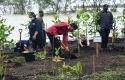 Jokowi-tanam-mangrove6.jpg