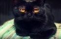 Kucing3.jpg