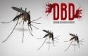 Nyamuk-Aedes-Aegypti3.jpg