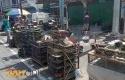 Pedagang-Burung-di-Vihara-Hok-Ann-Kiong.jpg