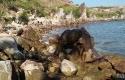 Pemandangan-Pulau-Jemur-di-Rokan-Hilir.jpg
