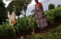 Petani-Malawi-Gunakan-Air-Pipis-untuk-Pupuk.jpg