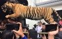 Polisi-menyita-harimau-yang-diawetkan-di-rumah-Abdul-Malik-di-Pejate.jpg