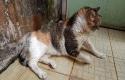 Rumah-Kucing-Pekanbaru2.jpg