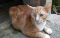 Rumah-Kucing-Pekanbaru3.jpg