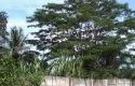 Tabek-Gadang-Kini-Ditutupi-Ilalang-dan-Pohon.jpg
