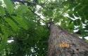 Unit-Manajemen-Hutan-Rakyat-UMHR.jpg