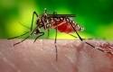 Virus-Zika.jpg