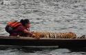 Yanti-dan-Harimau-Sumatera.jpg