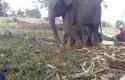 bayi-gajah.jpg