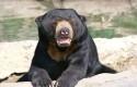 beruang.jpg