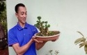 bonsai-wacang.jpg