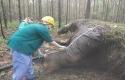 gajah-mati-lagi.jpg