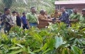 kampung-durian-RAPP.jpg