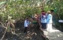 mangrove-pamban.jpg