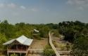 mangrove-siak.jpg