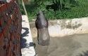 tapir-terjbak-kolam.jpg