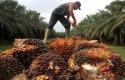 kelapa-sawit.jpg
